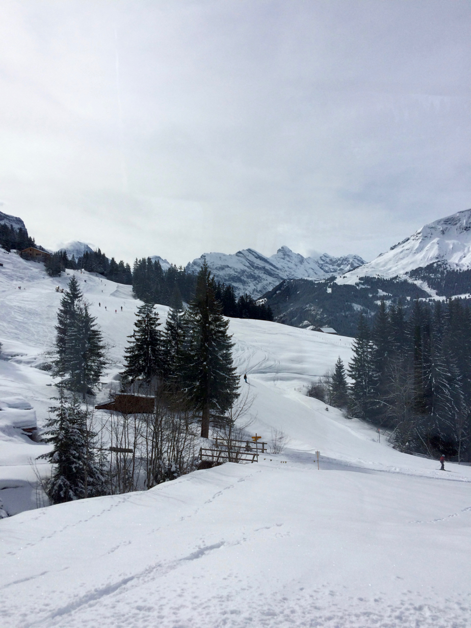 skiing near Wengen